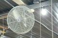 Рух повітря від розгінних вентиляторів у пташнику не можна спрямовувати на курчат