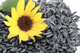 Переробники підіймають ціни попиту на соняшник