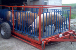 «Агропрайм Холдинг» планує продати близько 35 тис. товарних свиней