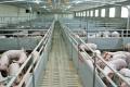 Світовий ринок м'яса атакують дві кризи