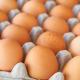 Учені припускають, що жирнокислотний склад яєць залежить від годівлі курей