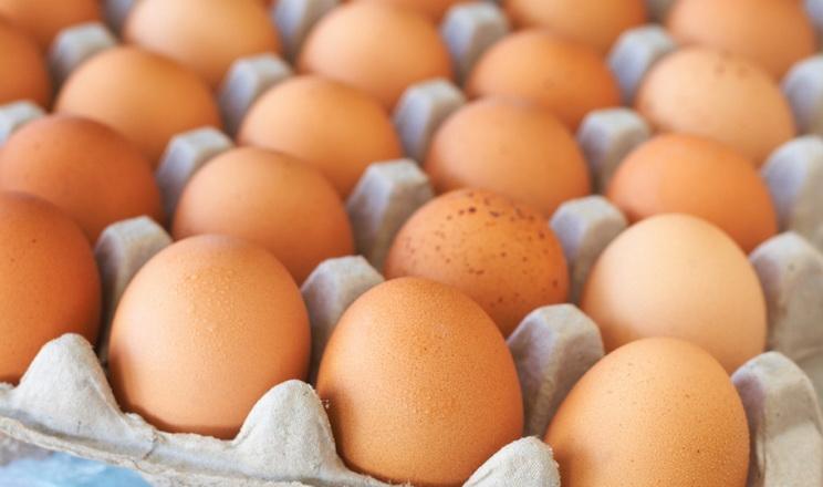 Експорт яєць за 11 місяців на 20% перебільшив увесь торішній