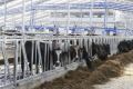 Катарська компанія хоче побудувати в Україні молочну ферму