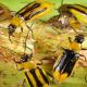 На Тернопільщині запровадили карантинний режим через західного кукурудзяного жука