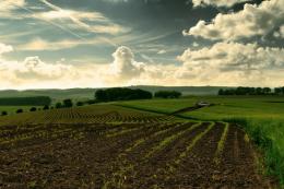 Волинські ОТГ отримають у власність 65 тис. га сільгоспземель
