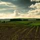 Основною проблемою овочівників фермер назвав відсутність вільної землі