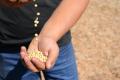 Серпнева спека вплинула на врожайність сої в Grain Alliance