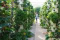 У Парижі відкриється найбільша ферма на даху