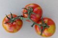 ЄС оголосив карантинним вірус коричневої зморшкуватості плодів томатів