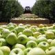 У Росії прогнозують зібрати на 20% менше плодоовочевої продукції