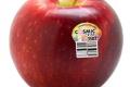 Нові сорти яблук замінять класичну «Велику п'ятірку»