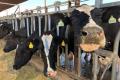 У США скорочується кількість ферм і зростають їхні розміри
