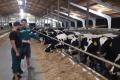 «Агропродсервіс» придбав  у Чехії понад 300 нетелей