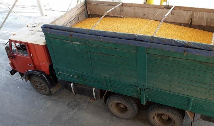 Світловодський річковий термінал відправить до Туреччини 6,5 тис. тонн кукурудзи
