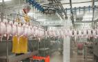 Уся галузь птахівництва з часом вироблятиме продукцію без антибіотиків, – думка