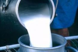 Промислове виробництво молока у січні-лютому зросло на 1%