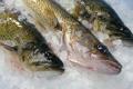 Велика Британія отримала можливість імпортувати рибу до України