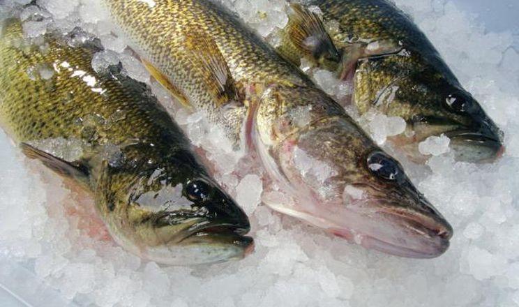 В Україні після кількарічного спаду почав зростати експорт свіжої або охолодженої риби