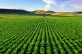 Якісний менеджмент вирощування сільгоспкультур дозволяє суттєво збільшити їхню врожайність