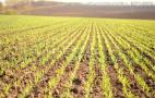 Ситуація зі зволоженням ґрунту на Черкащині є найгіршою за останні 30 років