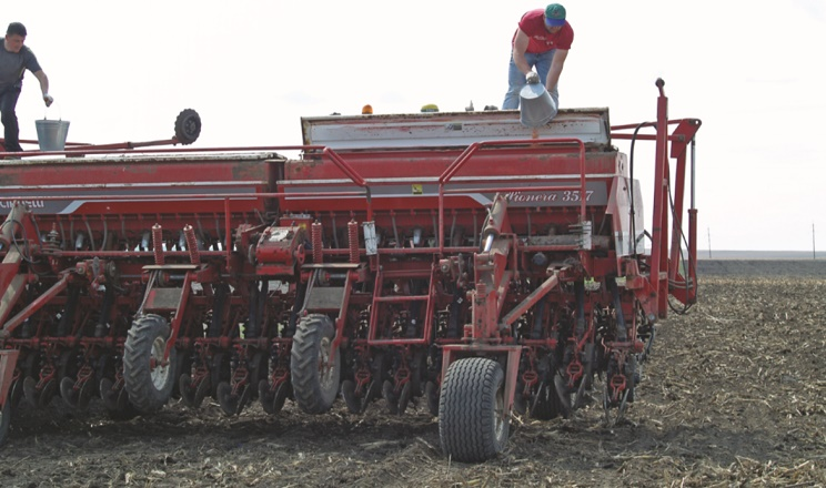 За ранньої сівби озимого ріпаку норму висіву насіння слід зменшити на 15-20%