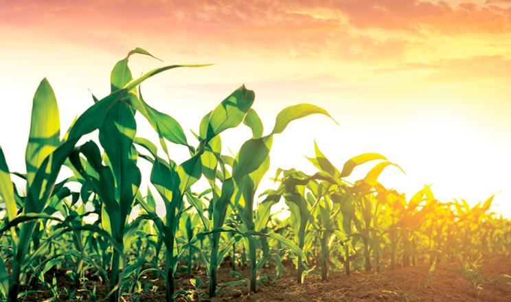 Сучасний погляд  на внесення фосфору
