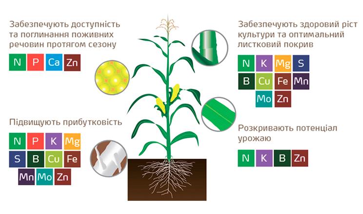 Агрохімічні особливості вирощування «цариці полів»