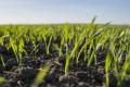 Добрива «Тімак Агро» дозволяють підвищити врожайність навіть у стресових умовах сходу України