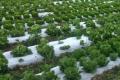 Вакуумне охолодження використовують для зелені та свіжих овочів