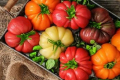 Томат – найпопулярніший овоч у Європі