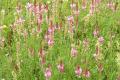 Вирощування багаторічних трав на еродованих землях дозволяє звести втрати ґрунту до безпечного рівня