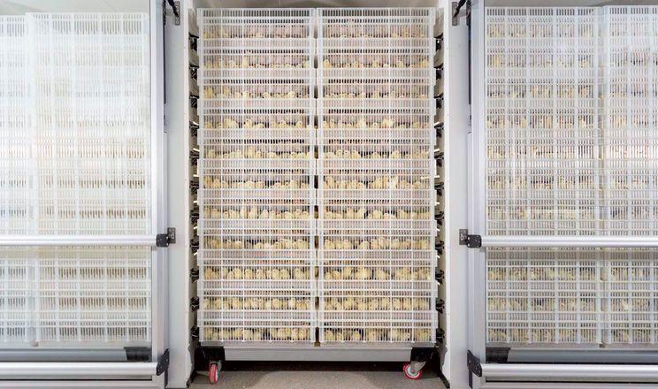 Іонізаційне опромінення інкубаційних яєць зменшує ембріональну смертність зародків до 5,3%