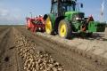 Професійні господарства зібрали на 20% менше картоплі