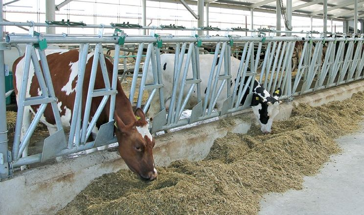 Вінницьке господарство запустило нову доїльну залу