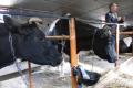 Торік на Рівненщині створено 11 сімейних фермерських господарств у молочному скотарстві