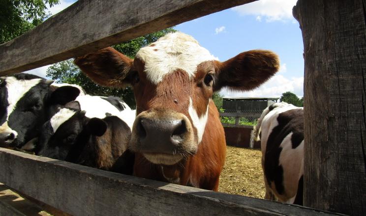 У листопаді буде значно спрощено процедуру ввезення тварин в Україну