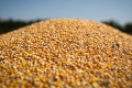 Мінекономіки зменшило власний прогноз виробництва зерна в Україні