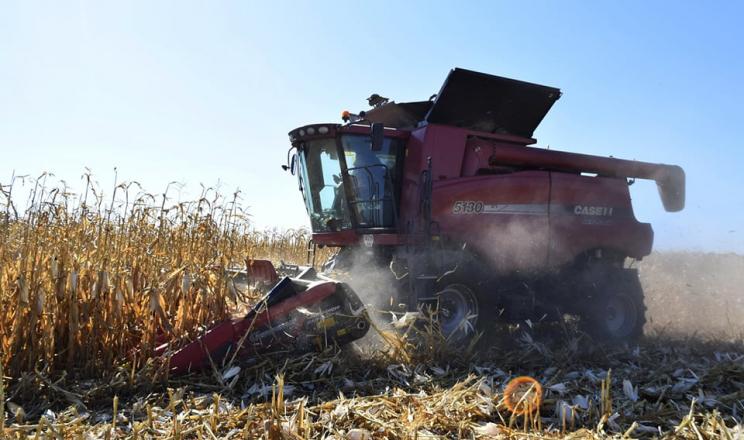 «Західний Буг» збирає кукурудзу з середньою врожайністю 10,5 тонн\га