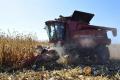 Один з підрозділів «Астарти» отримав хорошу врожайність кукурудзи