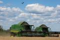 «Укрлендфармінг» покриває 2/3 потреби в насінні кукурудзи власним виробництвом