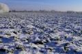 Ретарданти дозволяють підвищити стійкість озимого ріпаку до вимерзання