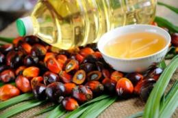 Світові ціни на рослинні олії у червні зросли більш ніж на 11%