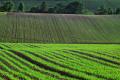 «В тіні» цього року вирощували до 6 млн га зернових, - дослідження
