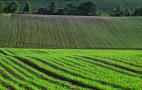 Аграрії забезпечені засобами захисту рослин на 106%