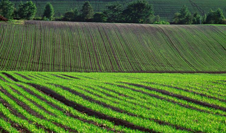 Під озиму пшеницю цього року запланували на 9,3% більше площ, ніж торік