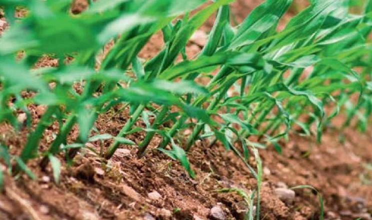 Ефективність ґрунтових гербіцидів залежить від низки чинників