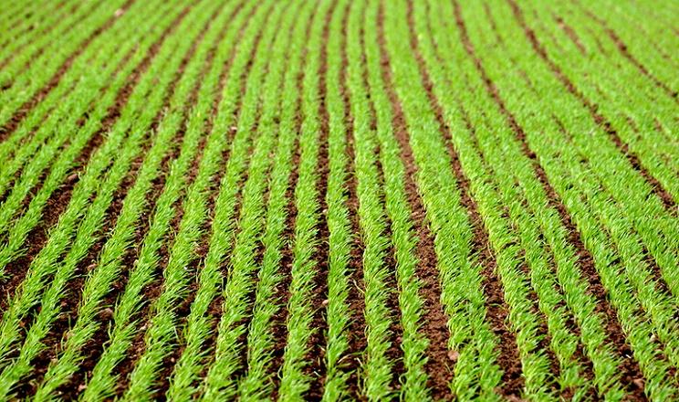 Осіння посівна: як підвищити урожайність культур за несприятливих погодних умов