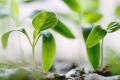 Corteva Agriscience розроблятиме біопрепарати разом із фінською Pro Farm Technologies