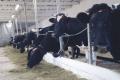 У чотирьох західних областях відкриють сімейні молочні ферми