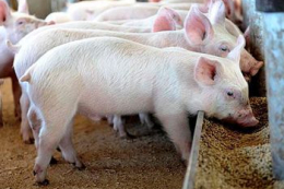 KSG Agro щорічно витрачає на кормову базу до 20 млн грн
